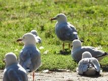 Edwards Lake Birdy photo stock