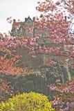 Edynburg kasztel przeglądać przez okwitnięć w wiośnie Obrazy Stock