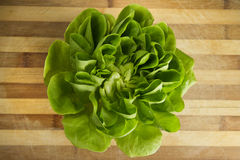 EDZR - Fresh Lettuce on a wood table Royalty Free Stock Photo
