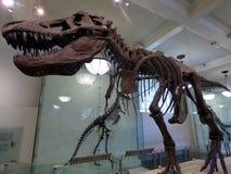 EE.UU. Nueva York Museo americano de la historia natural foto de archivo libre de regalías