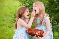 eeding的两个妹在的有机草莓 库存照片