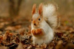 Eekhoorn. royalty-vrije stock fotografie