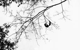 Eekhoorn in de Winter het Hangen van Boomtak Royalty-vrije Stock Afbeelding