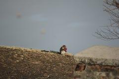 Eekhoorn die zijn voedsel in de stilte hebben stock afbeeldingen