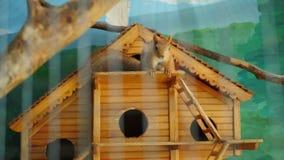 Eekhoorn in een kooi in het petting van dierentuin stock videobeelden