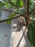 Eekhoorn en aard stock afbeelding