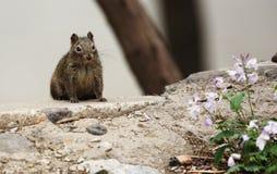 Eekhoorn en bloem stock foto's