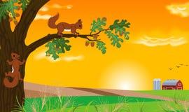 Eekhoorn en zonsonderganglandschap Royalty-vrije Stock Foto's
