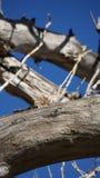 Eekhoorn het Een hoogtepunt bereiken over boom Royalty-vrije Stock Foto