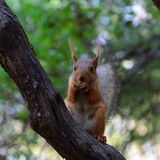 Eekhoorn in het park op zonnige de lentedag Stock Afbeelding