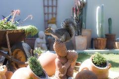 Eekhoorn het spelen in de tuin in Hout-Baai, Cape Town royalty-vrije stock afbeelding