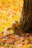 Eekhoorn klaar om een boom bij Rivieroeverpark te lanceren royalty-vrije stock afbeeldingen