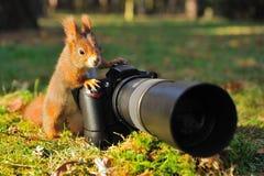 Eekhoorn met grote professionele camera Stock Foto