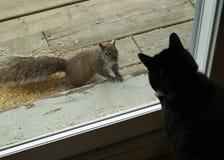 Eekhoorn onder Glas Stock Foto's