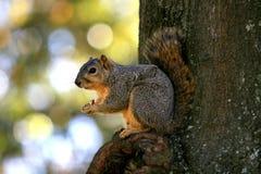 Eekhoorn op boom stock foto