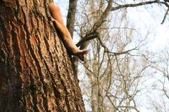 Eekhoorn op de boom Stock Foto