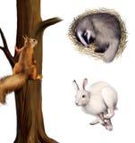 Eekhoorn op een boom, het slapen das, het lopen hazen.