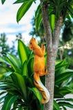 Eekhoornpop op een boom Stock Afbeeldingen