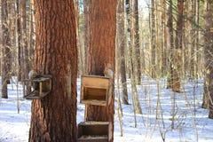 Eekhoorns Stock Afbeeldingen