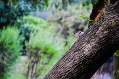 Eekhoorns die in roze tuin Chandigarh spelen royalty-vrije stock foto's