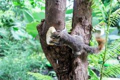 Eekhoorns op boom Stock Foto