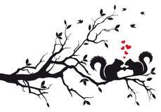 Eekhoorns op boomtak Royalty-vrije Stock Afbeeldingen