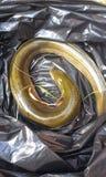 eel стоковые фотографии rf