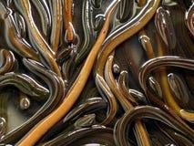 eel Стоковое Изображение RF