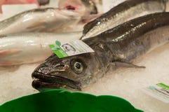Eel in Boqueira. Fish in Boqueira's market, Barcelona, Spain Royalty Free Stock Photography
