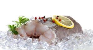 Eel fillet. Royalty Free Stock Image