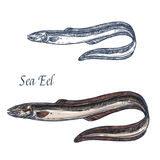 Sea eel fish vector  sketch icon Royalty Free Stock Images