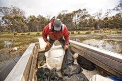 Eel Fisherman Stock Photography