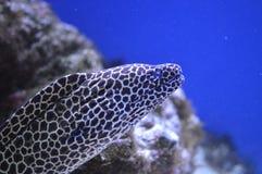 Eel Stock Image