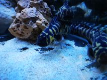 Eel in tank stock images