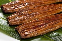 Eel ( unagi ) Stock Image