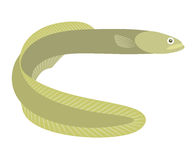 Eel. Vector illustration (EPS 10 stock illustration
