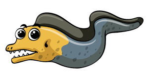 Eel on white background Royalty Free Stock Images