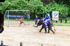 Eelephant阵营 图库摄影