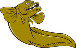Eelpout Fish Angry Cartoon Royalty Free Stock Images
