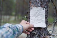 Een aankondiging, een brief, een bericht op een boom in het bos Stock Afbeelding