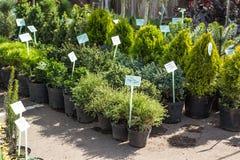 Een aantal installaties in potten in de tuinmarkt royalty-vrije stock afbeelding