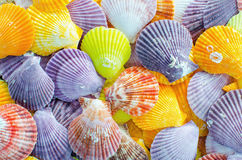 Een aantal Kleurrijke achtergrond van de Kammosselzeeschelp Royalty-vrije Stock Foto
