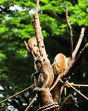 Een aap bekeek de camera royalty-vrije stock foto