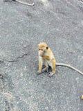 Een Aap - de Stijl van Sri Lankan stock afbeelding
