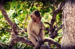 Een aap eet het fruit is op de boom stock foto