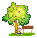 Een aap onder de boom naast een leeg houten uithangbord Stock Afbeelding