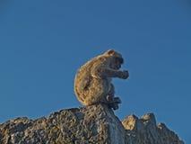 Een aap op de rots stock foto's