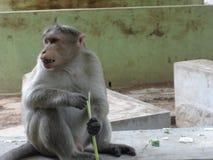 Een aapplaatsing op een vloer met het houden van een stam bij dierentuin Stock Foto