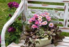 Een aarden bloempot met Chrysant royalty-vrije stock afbeelding