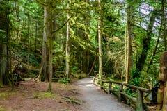 Een aarden weg met een houten omheiningsweg in een dicht bos, met stock fotografie